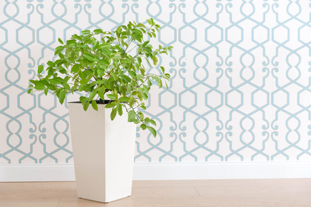 Green plant in white pot over blue and white background