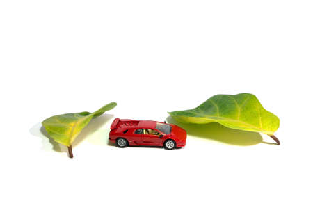 The relationship between petals and cars.