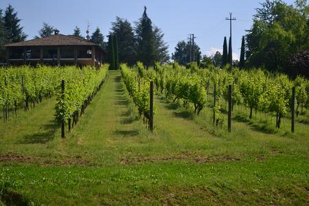 lambrusco: House in a vineyard Stock Photo