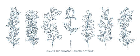 Set hand drawn curly grass and flowers on white isolated background. Botanical illustration. Decorative floral picture
