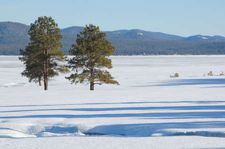 mormon: Snow at Mormon Lake Arizona Stock Photo