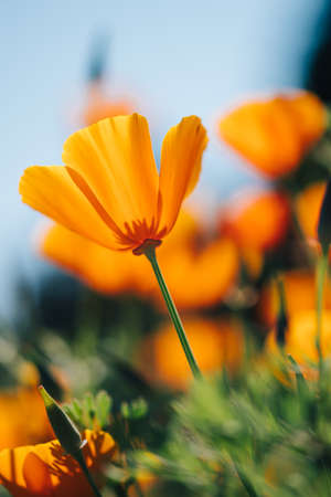 Macro photography of a yellow orange flower taken from below with very shallow depth of field.