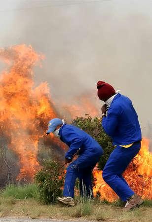 bush fire: Two men fighting a blazing bush fire