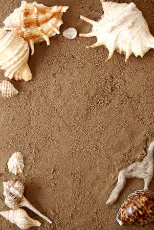 Border of variuos types of sea shells on sand  Stock Photo
