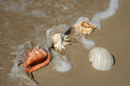 incoming: Shells on the sea shore or beach with the incoming tide washing over them Stock Photo