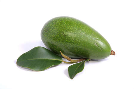 Whole Avocado Pear fruit on white background photo