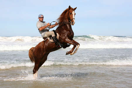 rearing: Rearing brown horse and rider in the water at the beach