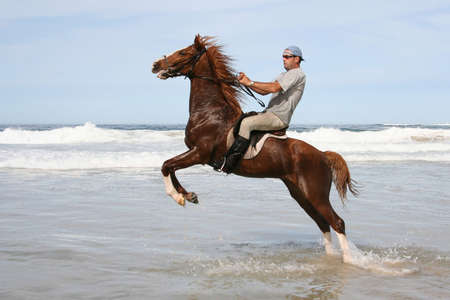 hooves: Rearing brown horse and rider in the water at the beach