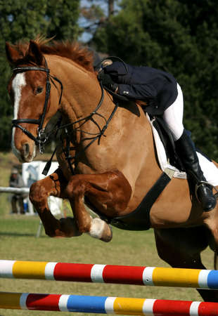 red competition: Beautiful brown horse jumping over a hurdle in a show jumping competition