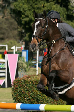 Beautiful brown horse jumping over a hurdle in a show jumping competition Stock Photo - 3266386