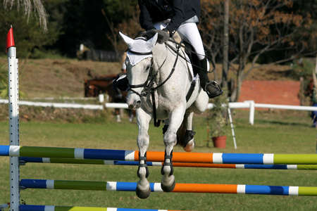 Beautiful white horse jumping over a hurdle in a show jumping competition photo