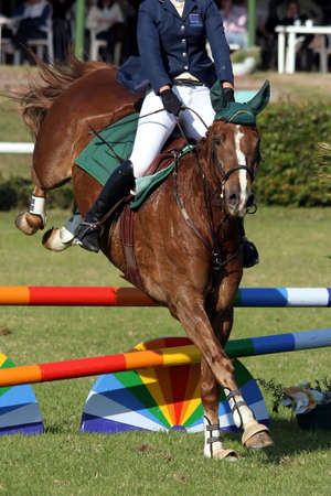 horse jumping: Beautiful brown horse jumping over a hurdle in a show jumping competition