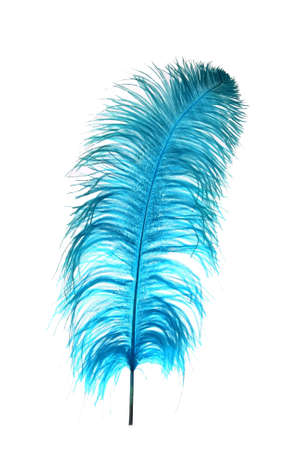 plume: Ostrich feather dyed blue against a white background