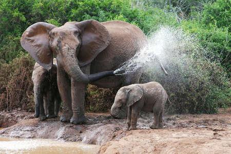 elefante: Elefante africano madre y el beb� de reflexi�n en un agujero de agua