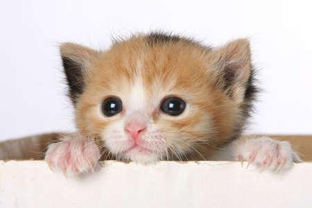 garra: Gatito peque�o en busca de una caja de cart�n