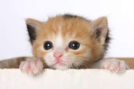 Small kitten looking out of a cardboard box