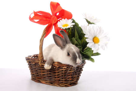 Cute bunny rabbit in a basket with flowers and bow photo