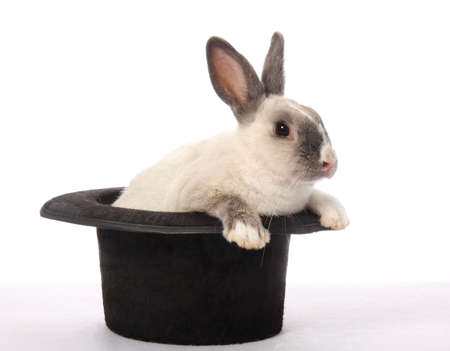 Cute bunny rabbit climbing out of a black hat photo