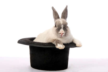 young rabbit: Mignon lapin lapin d'escalade d'un chapeau noir