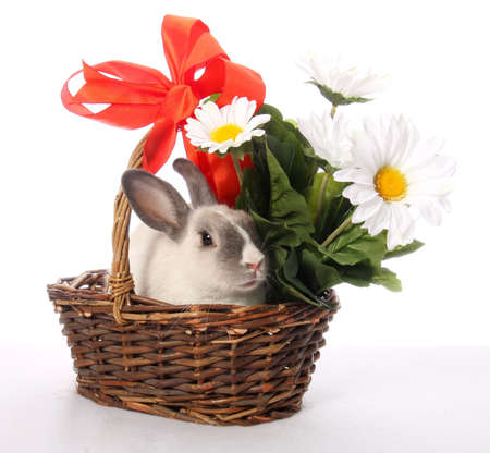 Cute bunny rabbit in a basket with flowers and bow
