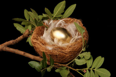 retirement nest egg: Golden egg in a nest with white feathers - conceptual Stock Photo