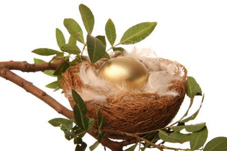 retirement nest egg: Golden egg in a nest with white feathers - conceptual retirement metaphor