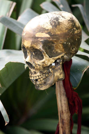 maxilla: Human skull on a wooden pole in the jungle Stock Photo