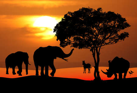 African wildlife silhouetted against a brilliant sunset photo