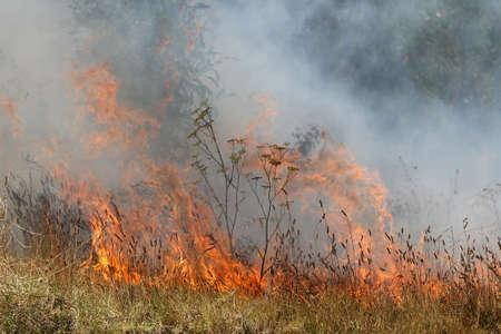 bush fire: A grass fire or bush fire in the wild Stock Photo