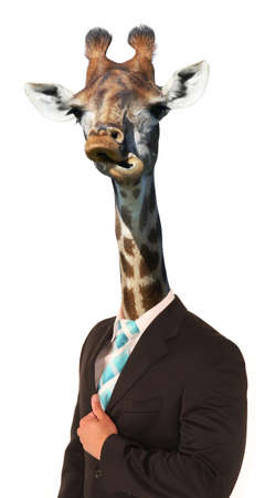 long neck: Giraffe with long neck and awkward look on mans body Stock Photo