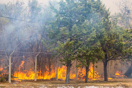Wild bush fire with large orange flames