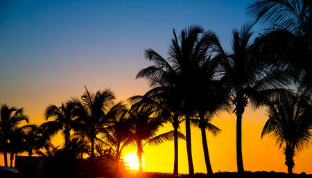Silhouetted Palm Trees at Sunset at the Coast in Barbados