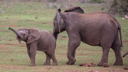 Two young elephants sniffing the air with their trunks