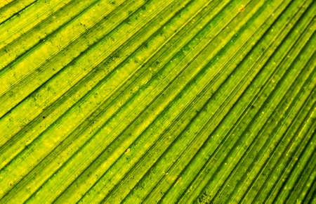 Close up of a palm tree leaf backlit by the sun Reklamní fotografie