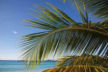 Palm Tree Leaf aginst the Blue Sky on a Tropical Island