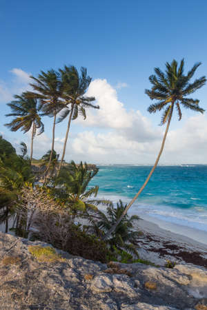 Beautiful tropical coastline with palm trees and cliffs in the Caribbean