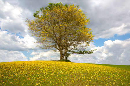 Tree with yellow flowers against the cloudy sky