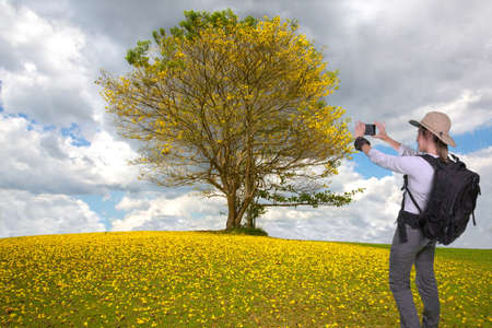 Young hiker lady taking a cellphone picture of a beautiful tree with yellow flowers Reklamní fotografie