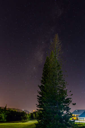 Tall pine tree against the night sky filled with stars Reklamní fotografie