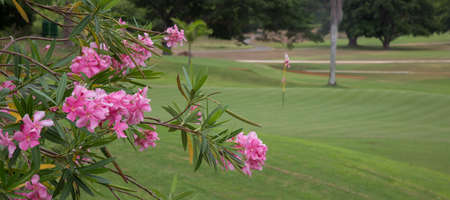 Lush golf green and pink flowers in tropical Jamaica