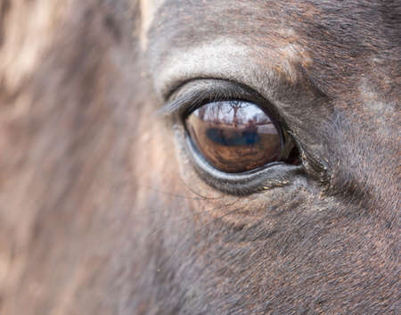 Close up of a beautiful horses eye