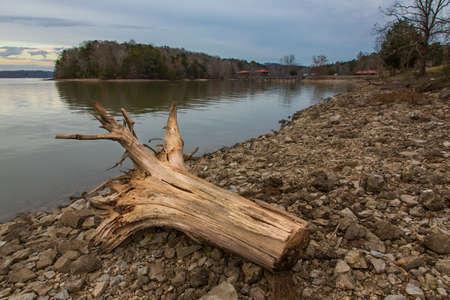 Dead tree stump on the shore of a dam