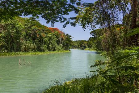 Tropikalna rzeka i roślinność na Jamajce na Karaibach