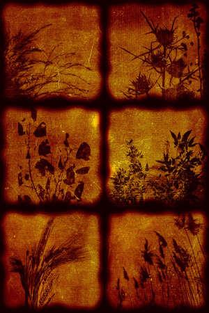 Vintage artistical stylish background, grainy texture. Flora theme Stock Photo - 356817