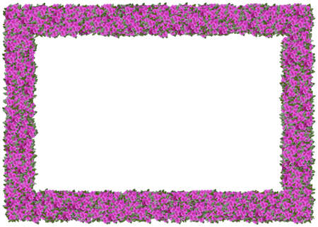 Purple Impatiens Frame. From The Floral Frames Series Stock Photo ...