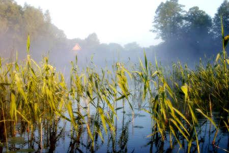 calamus: Early morning at the lake