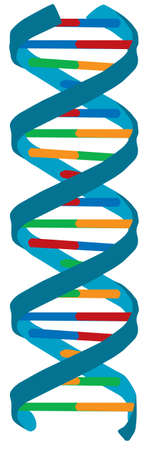 DNA color illustration, isolated Stock Illustration - 3210785