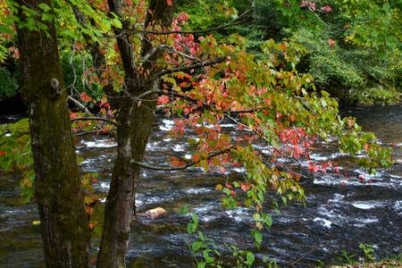 appalachian: Appalachian Mountain River Autumn-0