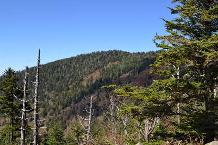 appalachian: Appalachian Mountain Scene-21