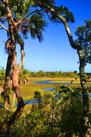 salt marsh: Salt Marsh in Northeast Florida Stock Photo